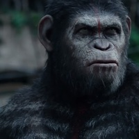Film: A majmok bolygója: Forradalom - Dawn Of The Planet Of The Apes (2014)