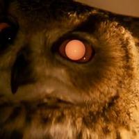 Ridley Scott nem kér szárnyast