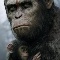 Monkey Business 2.0