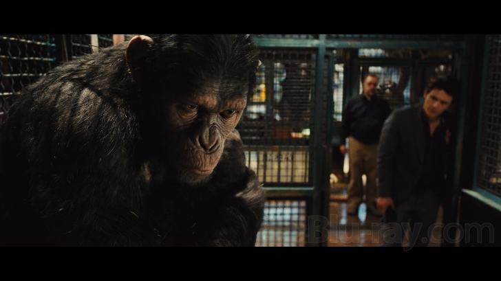 apes_bd_review.jpg