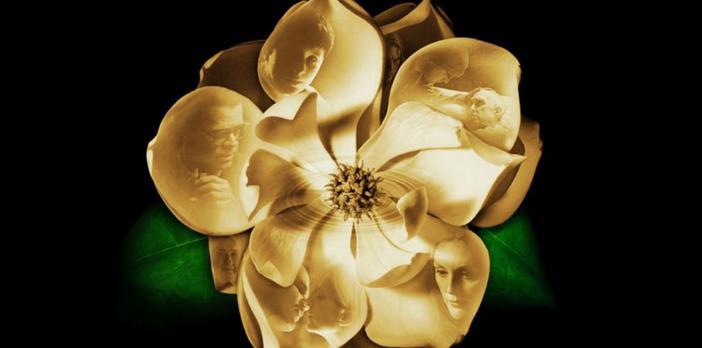 magnolia_movie.jpg