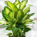 Tiszta levegőt a lakásba! Hogyan? Hát légtisztító növényekkel!
