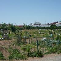 Közösségi kertek itthon és Spanyolországban