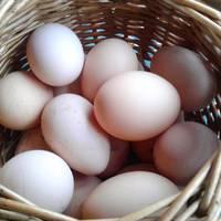 Tényleg sok 50 Ft egy házi tojásért?