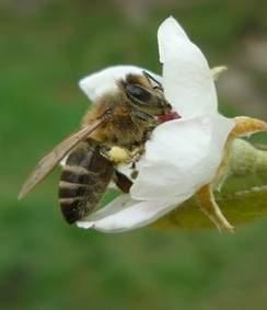 méh.JPG