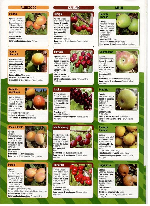 sárgabarack, cseresznye és almafajták