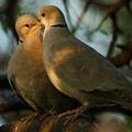 Elmélkedj úgy, mint egy madár! (4.)