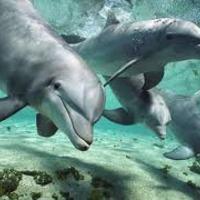 Delfinszerű együttműködés. Moderátor képzés. Módszerek 2.