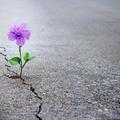 A remény erejéről ...