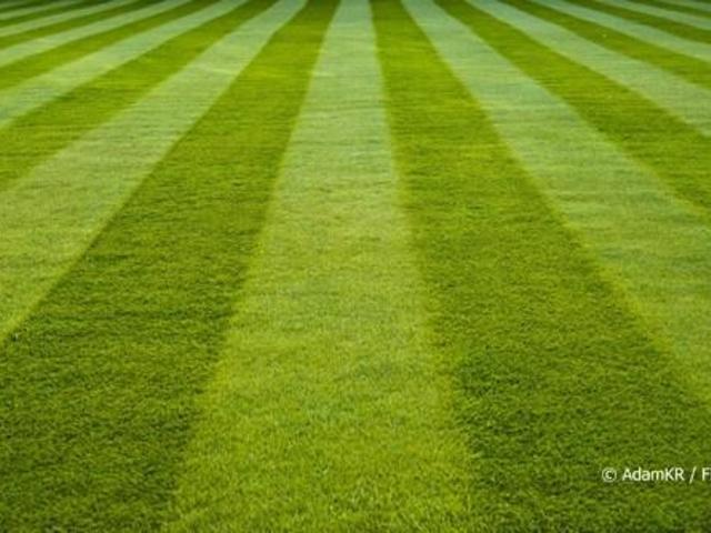 """""""A fű legyen zöldebb!"""" - Kapcsolat az anyavállalattal"""