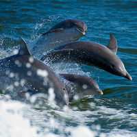 Delfin metafora 3. Hogyan oldjunk meg stratégiai problémákat?