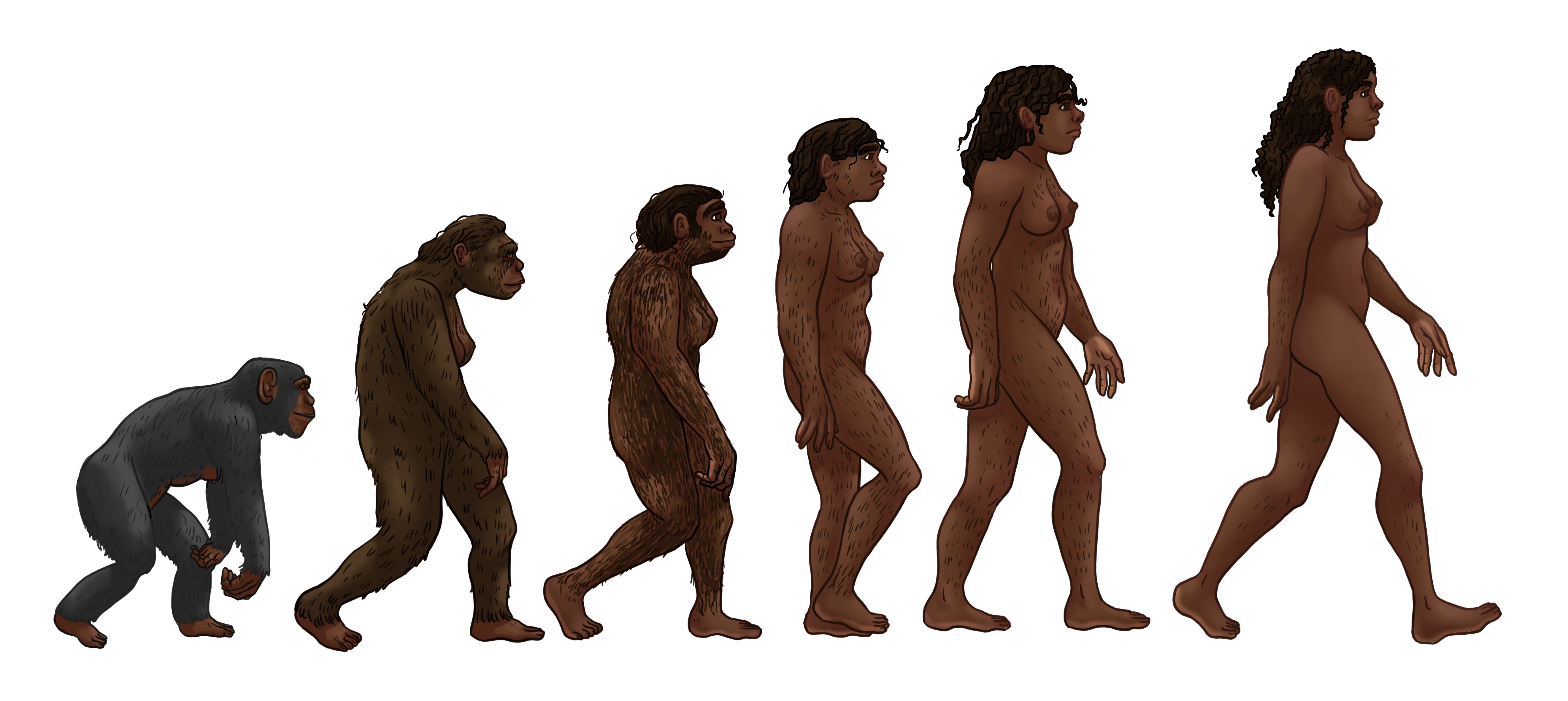 female_human_evolution_2.png