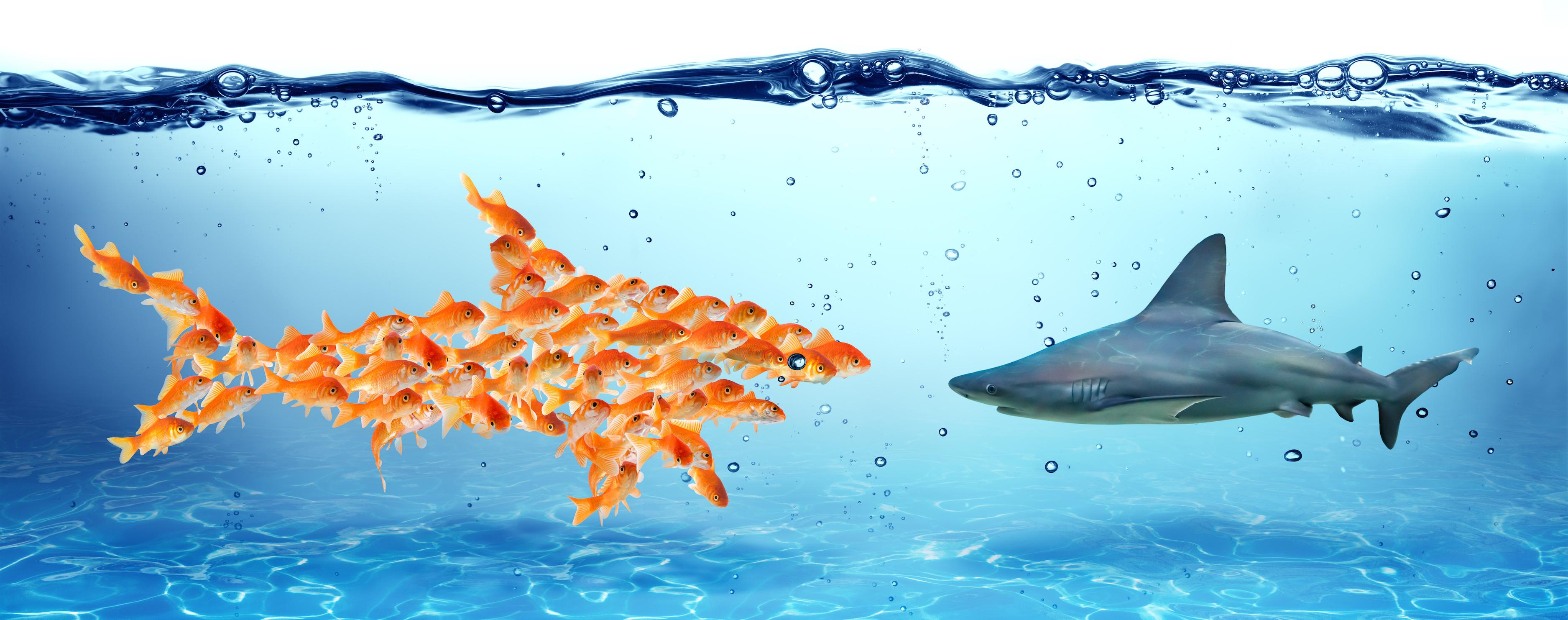 unity-is-strength_shark.jpg