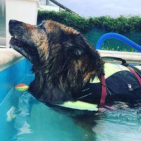 Van akinek a befúvó a kedvence #caninerehab #dog #hydrotherapy #doglover #wellness #pool