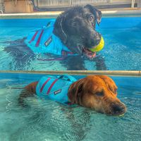 New wave #dog #caninerehab #hydrotherapy #ruffwear #doglover #swimmingpool