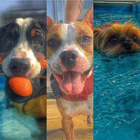 Friday fun #dog #caninerehab #hydrotherapy #ruffwear #doglover #yorkshireterriersofinstagram #bernesemountaindogsofinstagram #staffordshiredogs