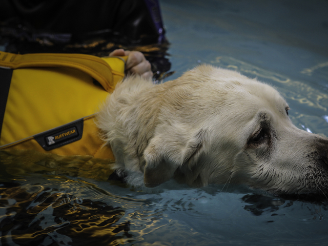 A kutya hidroterápia kialakulása