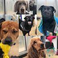 Szombati móka #dogs #hydrotherapy #spaniel #vizsla #tappancs #ruffwear #saturdayfun #canine #poolside