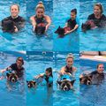 Hydrotherapy Workshop #doglover #ruffwear #hydrotherapy #caninerehab #dog #physiotherapy