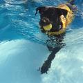 Egy új kutatás szerint az úszás javítja a mobilitást