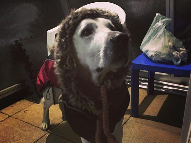 Hideg van #richie #hydrotherapy #canine #doglove #funnydog