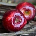 Karácsonyi alma - mininovella