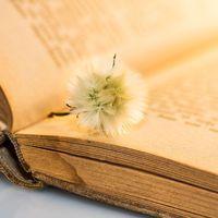 Vajon te írod életed könyvét?
