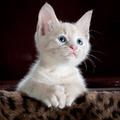Az óvodai macska élete