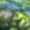 A pók - novella