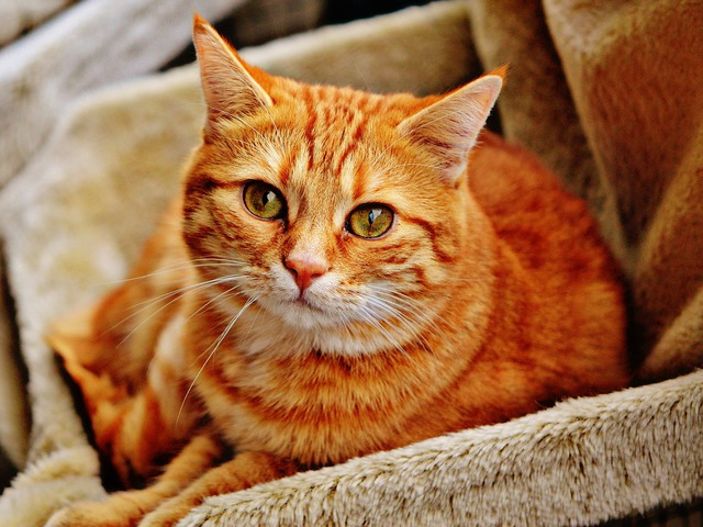 Az a büdös macska... - novella
