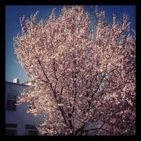 Ilyen a tavasz az ablakunkból