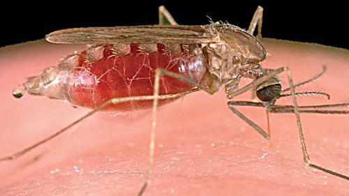malaria-disease.jpg