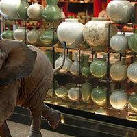 Egészséges elefántbébi született egy celldömölki porcelánboltban