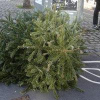 Karácsonyfákkal együtt 40 hozzátartozót dobtak ki az utcára