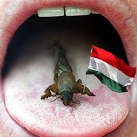 Rovarevő lesz a magyar!