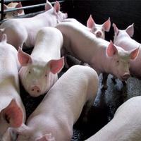 Áfa mértéke - Mikor csökkenhet a hús áfája? 2014-től?
