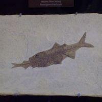 Fosszilis halak