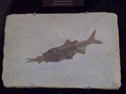 fish-fossil.jpg