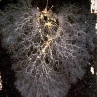 Bio tunning: Mikorrhiza gombák és a növények kapcsolata