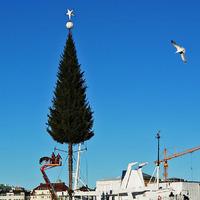 Kis karácsonyfa, nagy karácsonyfa