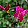 Séta a stockholmi botanikus kertben - kitalálós poszt