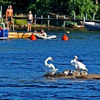 Nyár Stockholmban (7) - Tengerparti idill