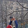A virágnak Stockholmban sem lehet megtiltani...