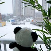 Terasz Stockholmban - Hull a hó és hózik