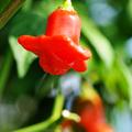 Kitalálós poszt - Négy növény a stockholmi botanikus kertből