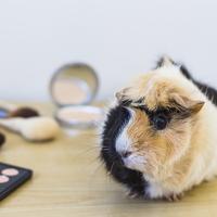 Hogyan vásároljunk állatbarát kozmetikumokat?