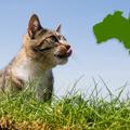 Miért irtják a macskákat Ausztráliában?