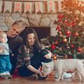 Miért ne ajándékozzunk élő állatot karácsonykor (se)?