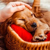 Hogyan szeressük jól az állatokat?