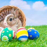 Mi történik igazából, ha húsvétra nyuszit veszünk a gyereknek?